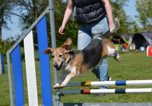 onderhoudenbehandeling sporthond