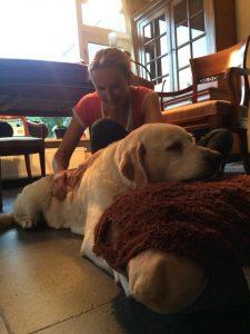 Behandeling geriatrische hond